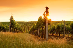 виноградники взгляда вечера Стоковое Фото