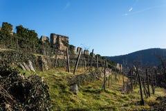 Виноградники в долине Vachau стоковое изображение