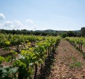 Виноградники в зоне Var южной Франции стоковое изображение rf