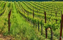 Виноградники в Калифорнии, США стоковое фото