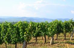 Виноградники в косогоре около города Tokaj, Венгрии Стоковое Фото