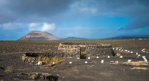 Виноградники в Ла Geria, Лансароте, Канарских островах, Испании Стоковые Фотографии RF