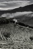 Виноградники в Португалии стоковая фотография rf
