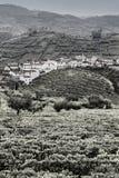 Виноградники в Португалии стоковое фото