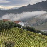 Виноградники в Португалии стоковые изображения rf