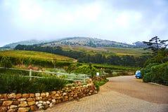 Виноградники в Constantia Кейптауне Стоковое Изображение