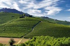 Виноградники в Langhe стоковая фотография