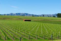 Виноградники в Marlborough стоковое фото rf