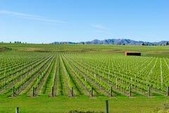Виноградники в Marlborough стоковые изображения