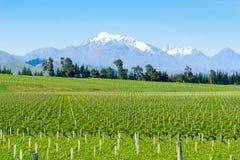 Виноградники в Marlborough стоковое изображение rf