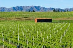 Виноградники в Marlborough стоковое изображение