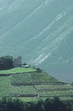 виноградники гор замока малые окруженные Стоковые Изображения