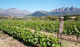 виноградники гор стоковые изображения