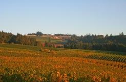 виноградники долины Стоковая Фотография