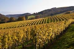 виноградники зюйдвеста Франции Стоковое Фото