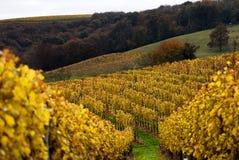 виноградники зюйдвеста Франции Стоковое Изображение