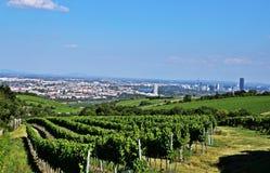 Виноградники и вена стоковые изображения
