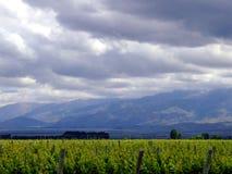 Виноградники и небо стоковые фото