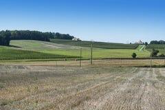 Виноградники и пшеничные поля стоковое изображение rf
