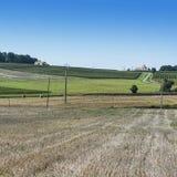Виноградники и пшеничные поля стоковое фото rf