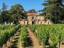 Виноградники на Замке Маркизе de Vaban - Blaye - Франции стоковые изображения