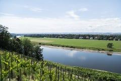 Виноградники на холме около реки в летнем дне стоковое фото