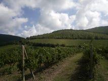 Виноградники около деревни Abrau-Durso стоковая фотография