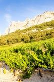виноградники около Gigondas на Col Du Cayron, Провансали, Франции стоковое фото rf