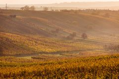 Виноградники осени Moravian стоковые фотографии rf