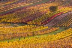 Виноградники осени Moravian стоковая фотография