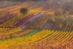 Виноградники осени Moravian стоковая фотография rf