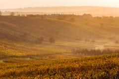 Виноградники осени Moravian стоковые изображения rf
