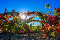 Виноградники падения в Temecula CA Стоковые Изображения