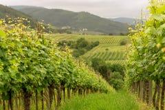Виноградники панорамы в Баден-Баден стоковое изображение rf