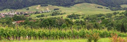 Виноградники панорамы в Баден-Баден стоковое фото