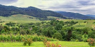 Виноградники панорамы в Баден-Баден стоковые фото