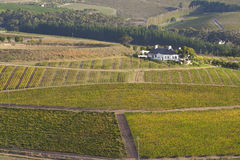 виноградники сельского дома стоковые фото