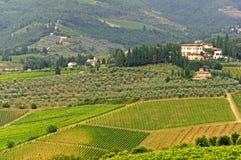 виноградники Тосканы chianti стоковые фотографии rf