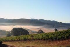 виноградники утра Стоковые Изображения RF
