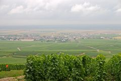 виноградники Франции стоковая фотография