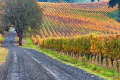 Виноградники холмов Данди в Орегоне Стоковое Изображение