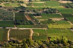 виноградники Хорватии Стоковые Фотографии RF