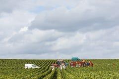 Виноградники Шампани в Cuis Франции Стоковые Фотографии RF
