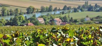 виноградники шампанского Стоковое Изображение RF