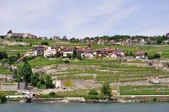 виноградники Швейцарии lavaux озера geneva Стоковые Изображения RF
