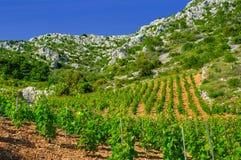 Виноградники, южный свободный полет острова Hvar стоковое фото