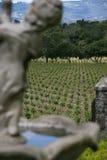 виноградники Стоковые Фото