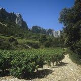 виноградники стоковая фотография rf