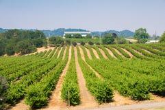 виноградники california стоковые фото