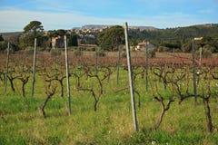 Виноградники Cassis на предпосылке зимы голубого неба Стоковые Изображения RF
